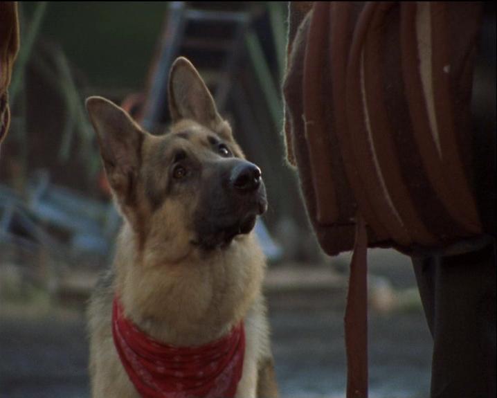 police dog tv series austrian genius olilolo com